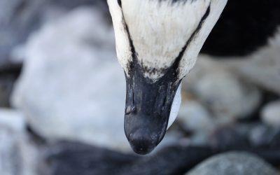Vogelgrippe –
