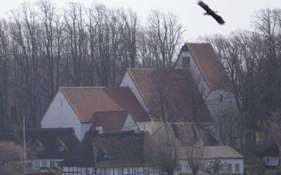 Seeadler zwischen Schneegestöber und Sonnenschein am Ostermontag